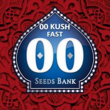 Chocolate Kush Fast de 00 Seeds