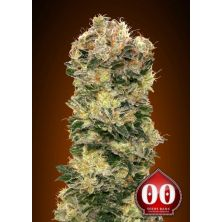 Auto Sweet Soma de 00 Seeds Bank