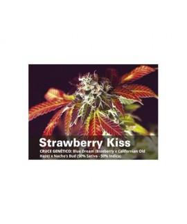 Strawberry Kiss de Bcn Seeds