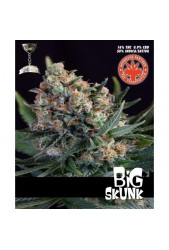 Big Skunk de Pure Seeds