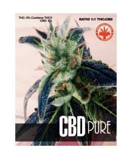 CBD Pure de Pure Seeds CBD