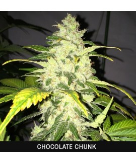comprar Chocolate Chunk