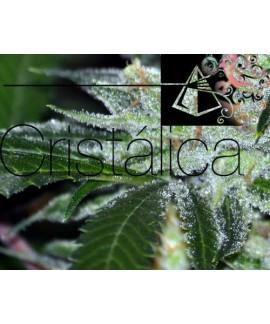 Cristalica de The Doctor Seeds