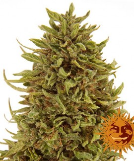 comprar Pineapple Express