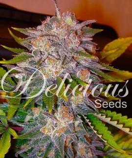 comprar Caramelo de Delicious Seeds