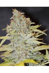 Furious Candy de Eva Seeds