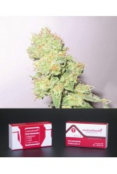 Colección 2 Feminizada de Medical Seeds