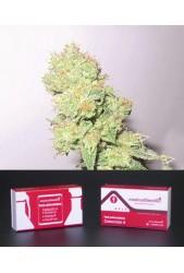 Colección 4 Feminizada de Medical Seeds