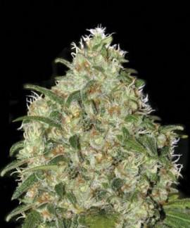 comprar Amnesia Platinum de Bulk Seed Bank