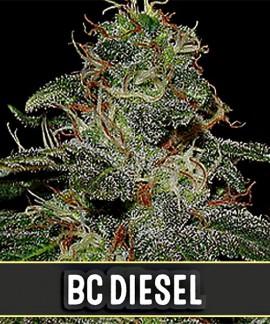 comprar BC Diesel