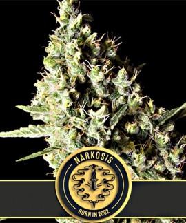 Narkosis de Blimburn Seeds