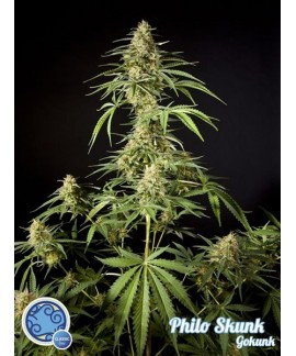 comprar Philo Skunk