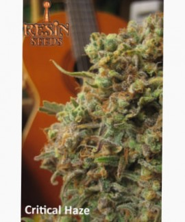 comprar Critical Haze de Resin Seeds