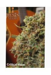 comprar Critical Haze de Resin Seeds
