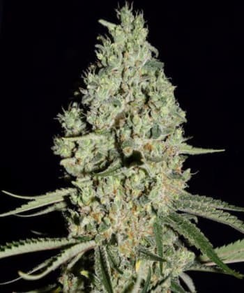 Super Critical de Green House