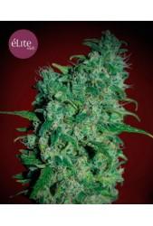 Llimonet Haze Clásica THC de Élite Seeds