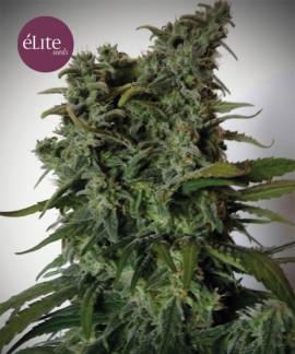 comprar Elite 47