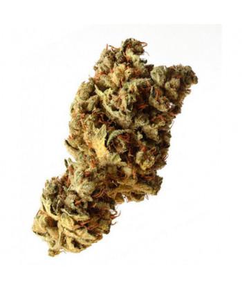 Comprar Pineapple Kush de Amsterdam Genetics