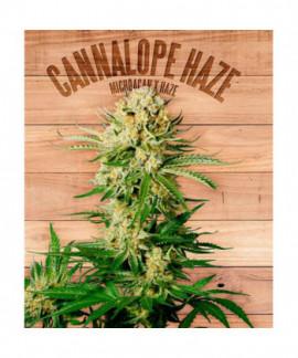 comprar Cannalope Haze