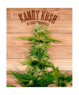 comprar Kandy Kush