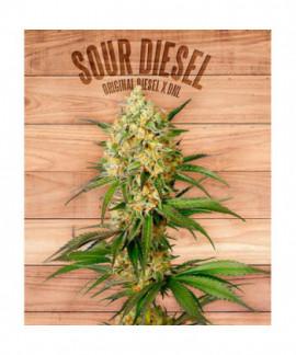 comprar Sour Diesel