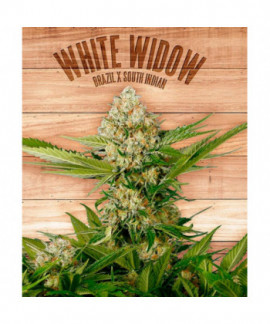 comprar White Widow