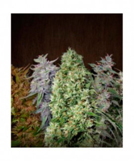 comprar Ace Mix de Ace Seeds