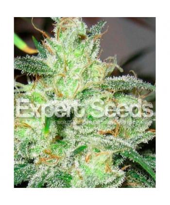 Comprar Gorilla Glue 4 x Cheese de Expert Seeds