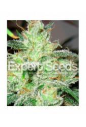 Gorilla Glue 4 x Cheese de Expert Seeds