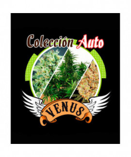 comprar Coleccion Auto