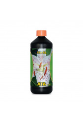 ATA XL - Atami