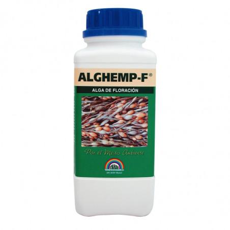 Alghemp Floracion