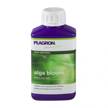 Alga-Bloom