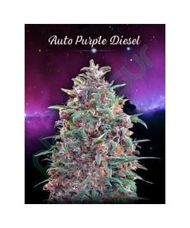 comprar Auto Purple Diesel