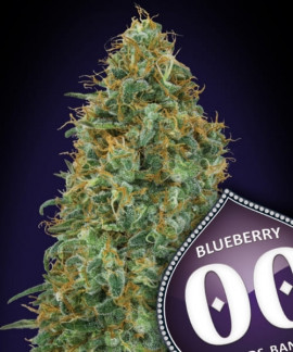 comprar Blueberry
