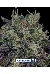 Black Widow de Positronics