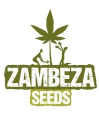 Semillas Zambeza Seeds Feminizadas