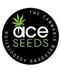 Semillas Autoflorecientes Ace Seeds online