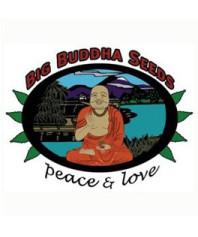 Big Buddha Auto
