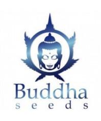 Buddha Seeds Auto
