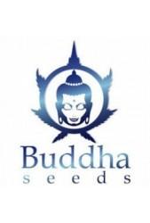 Comprar semillas Buddha Seeds autoflorecientes baratas