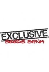 Comprar semillas Exclusive Seeds autoflorecientes baratas