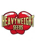 Semillas Heavy Weigth Seeds Autoflorecientes