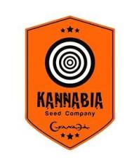 Kannabia Seed Auto