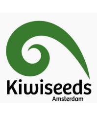 Kiwi Seeds Auto