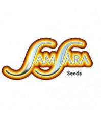 Samsara Seeds Auto