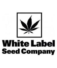 Sensi White Label Auto