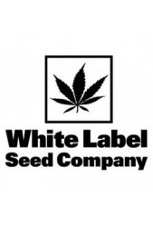 Comprar semillas Sensi White Label Autoflorecientes Baratas