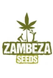 Comprar semillas Zambeza Seeds Autoflorecientes Baratas
