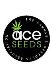 Semillas Ace Seeds regulares ¡No puedes quedarte sin ellas!